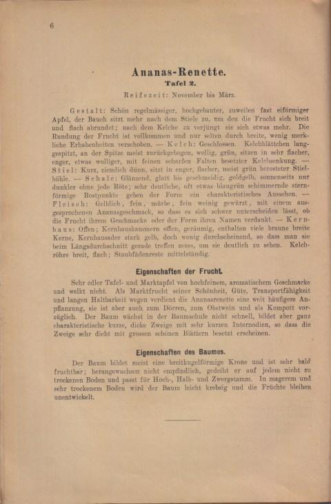 Bild: Beschreibung der Ananas Renette im Buch Unsere besten Deutschen Obstsorten Band I: Äpfel von 1923.