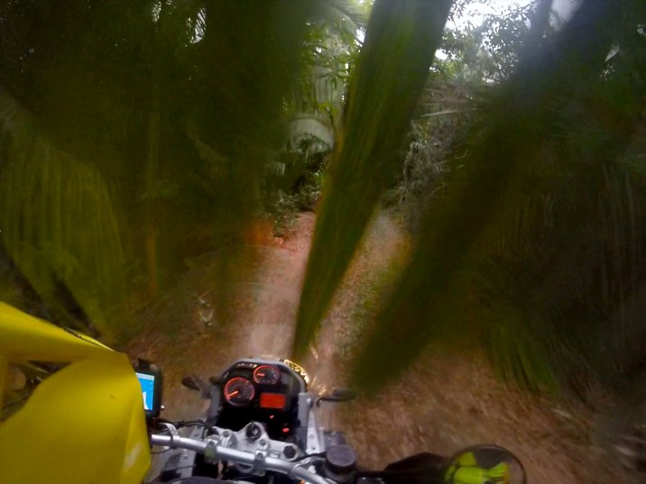 I ride through overhanging palms for about two kilometers.