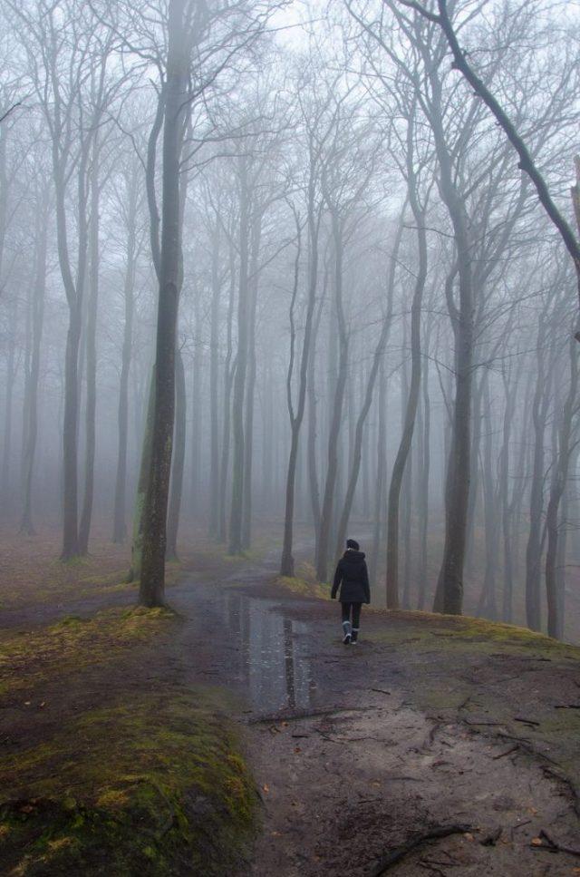 Binz Wald Nebel