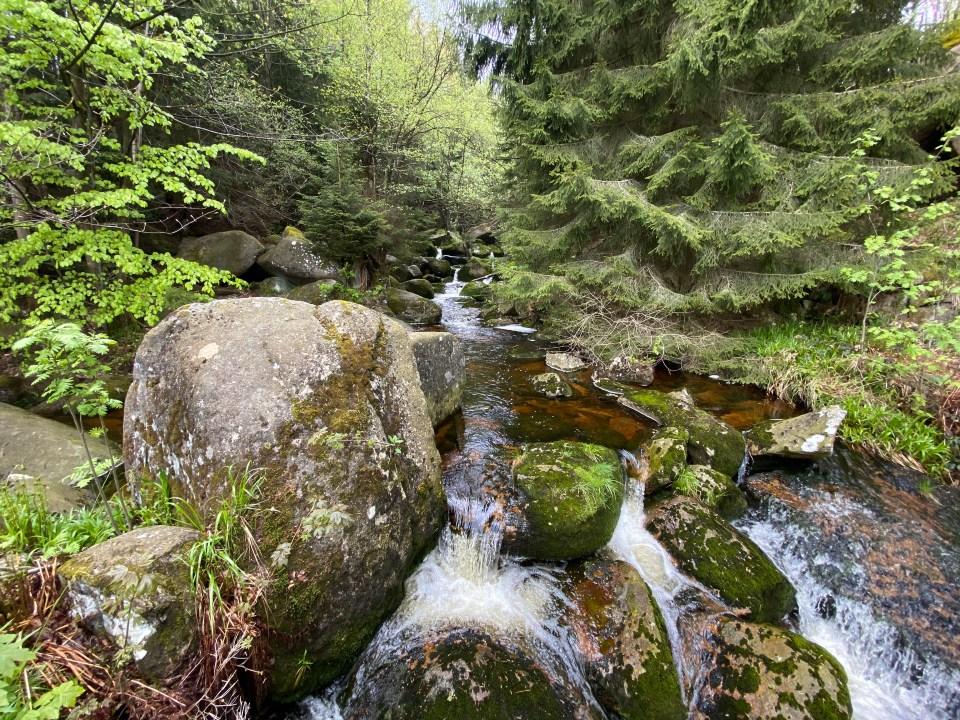 Wandern im Harz: Ottofels und Steinerne Renne