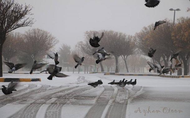 عين أردنية ......طيور وثلج