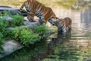 اميركية تتبرع بـ 22 مليون دولار لحديقة حيوانات