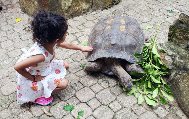 A Kid playing with Giant Turtle at Moyenne Island Seychelles