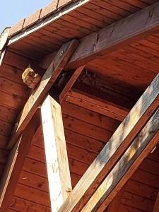 Sršní hnízdo 1
