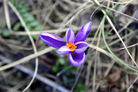 Glasnici proljeća