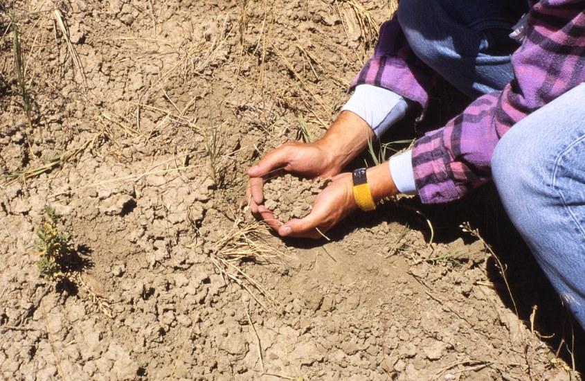 Zašto rad u vrtu utječe pozitivno na raspoloženje? Odgovor je u dosta neobičnoj spoznaji