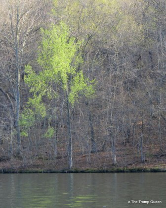 first leaves, late March at Gov Dodge SP, image by TTQ cc