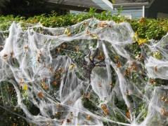 Spider Invasion!