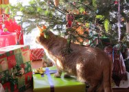 Zella stalking under the tree. 2012.