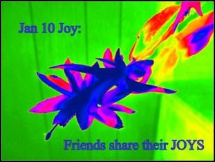 Jan 10 Joy: Friends share their JOYS