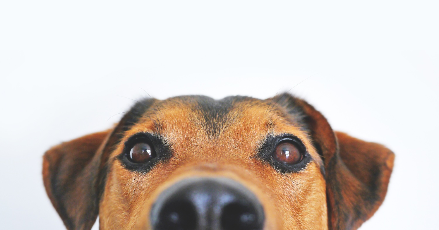dog close-up