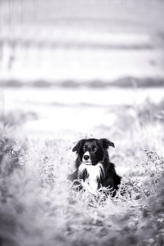 Pet photography boise idaho-