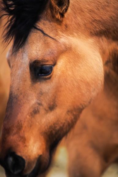 Horse photography nampa idaho