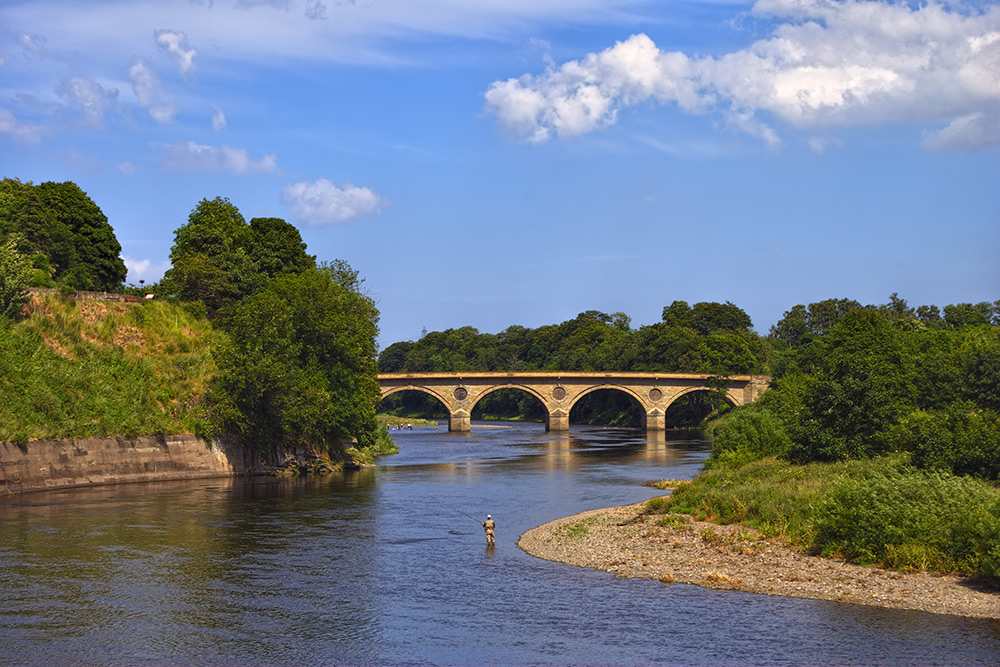 Angler in the river Tweed near Coldstream, Scotland