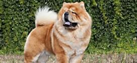 year of the Yang Earth Dog Wu Xu