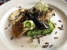 Fish of the day - barramundi