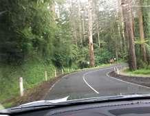 Windy Road Olinda