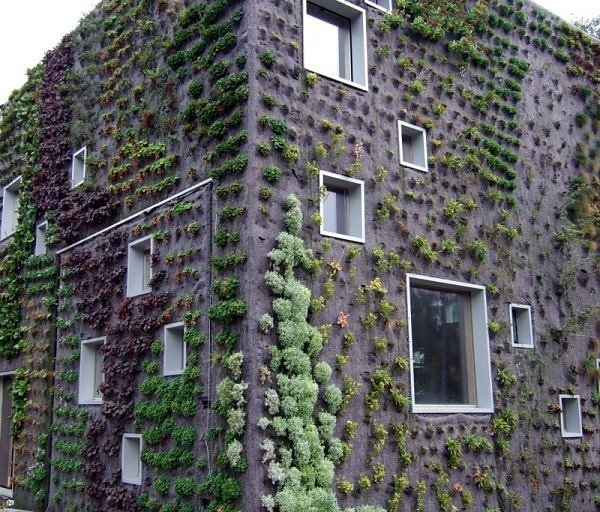 Vegetable Garden Raised Unique