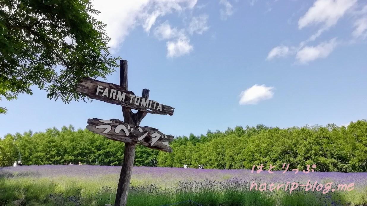北海道 中富良野町 ファーム富田 トラディショナルラベンダー畑