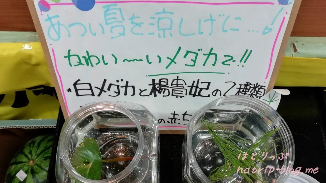 新潟県上越市 道の駅 うみてらす名立 食彩鮮魚市場