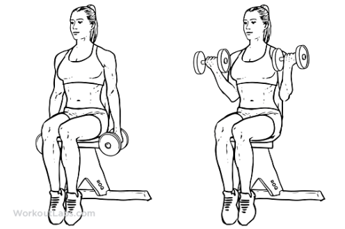 Seated_Dumbbell_Curl1