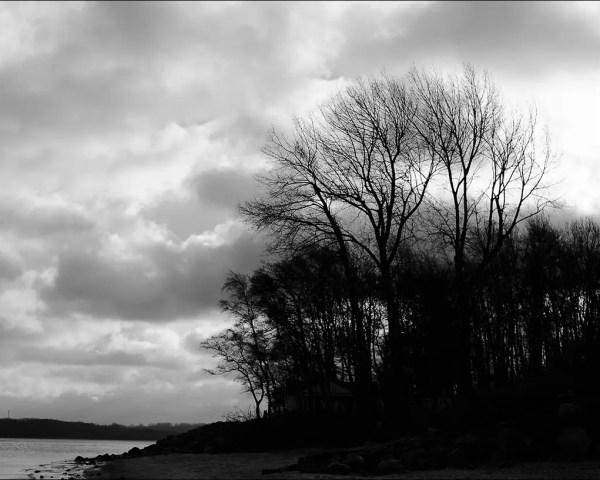 des arbres hibernales sur la côte