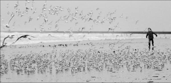 une des joies de la jeunesse, chasser des oiseaux ;)
