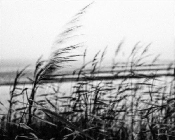 le vent joue le roseau