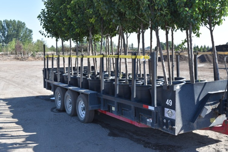 tree delivery trailer for sale