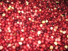 Cranberry Shipments; Port Manatee Signs Agreement