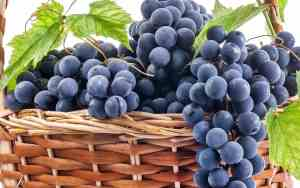 muscatoGrapes