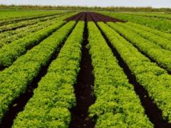 Branch is Excited Heading into Another Successful Leafy Vegetable Season