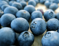 New Research Examines Effects of Blueberry Consumption on Heart Health