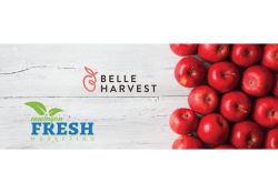 Belleharvest, Michigan Fresh Join Forces to Ship Apples
