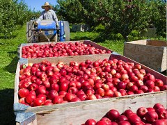 Washington Fruit & Produce Rebuilds from Devastating Fire