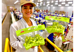 Nogales Importer has Seasonally Moved from Peruvian to Chilean Grapes