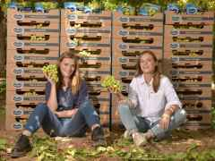 Oppy Expands Ocean Spray Partnership with Southern Hemisphere Grapes