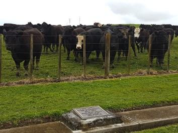 Mercer Cemetery – Waikato