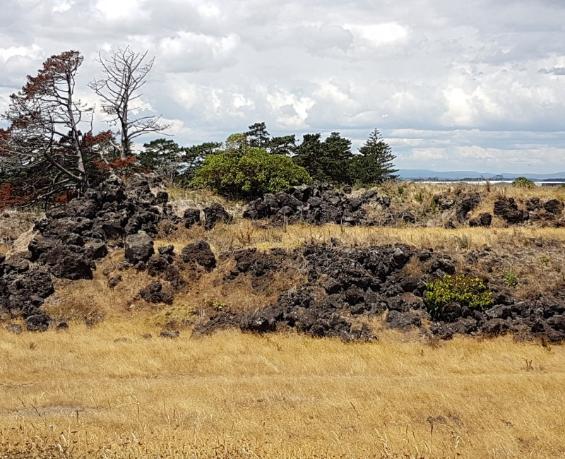 Otuataua Stonefields: 2nd research visit – Mangere, Auckland