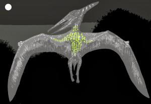 Duah sketch, showing luminous underside at night, Tim Morris