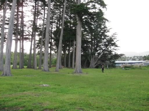 Kioreroa Cemetery 21