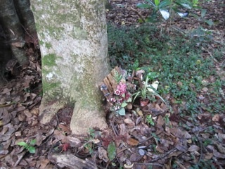 Maunu Cemetery 11
