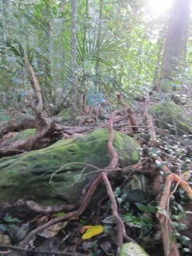 Maunu Cemetery 18