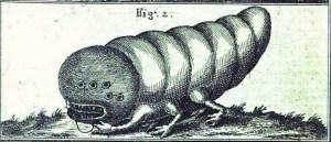Stone worm, pic 2
