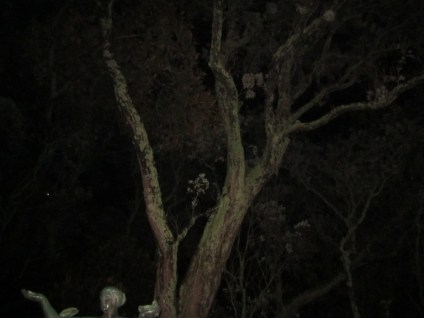 The Three Witches, Auckland Domain 07