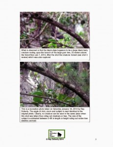 The Tree Sitter Photo Sequence report Jan 2014 page 2