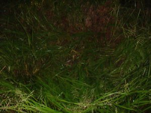 beerwah night run 055