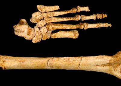 Are Orang Pendeks Relict Homo Floresiensis?