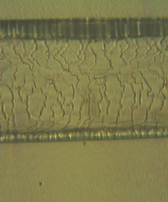 Yowie – What are they?