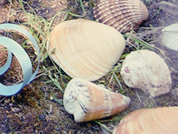 Unterwasserparty-Muscheln